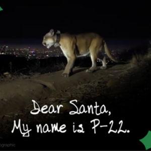 VIDEO: Dear Santa From P-22