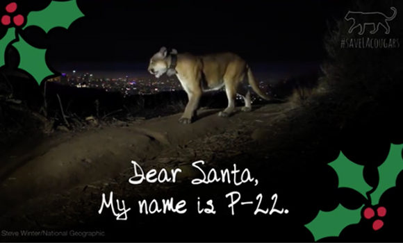 VIDEO: Dear Santa From P-22