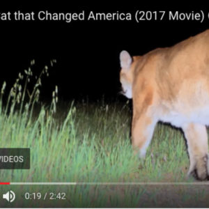 P-22 Makes His Movie Debut!