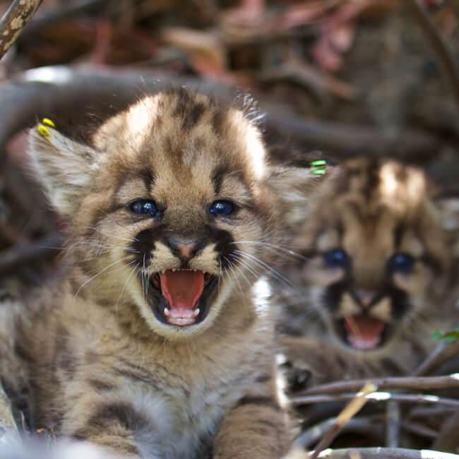 A cougar meet a beautiful kitten j amp s - 1 part 9