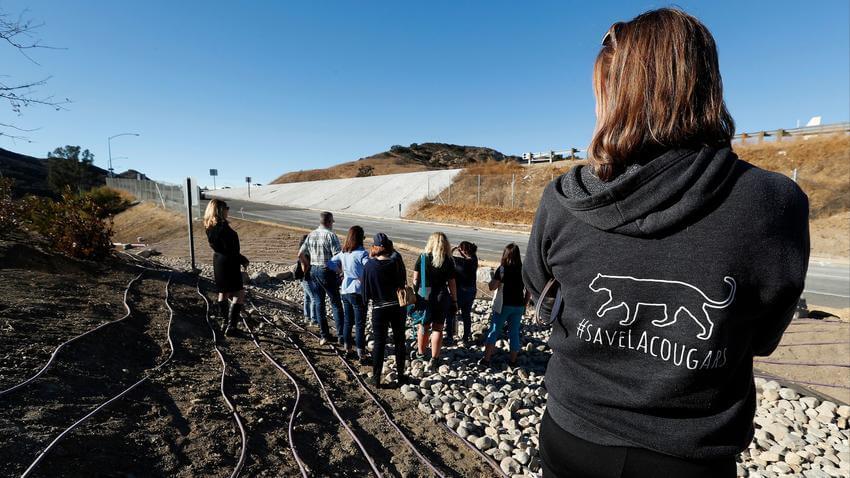 LA Times | To build a bridge for mountain lions, wildlife activists need $60 million