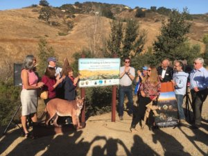 Kick-off for Following the Footsteps of P-22 Hike | Tuesday, October 23, 2018 from 9 AM – 9:30 AM | Liberty Canyon Road, North of 101 Freeway