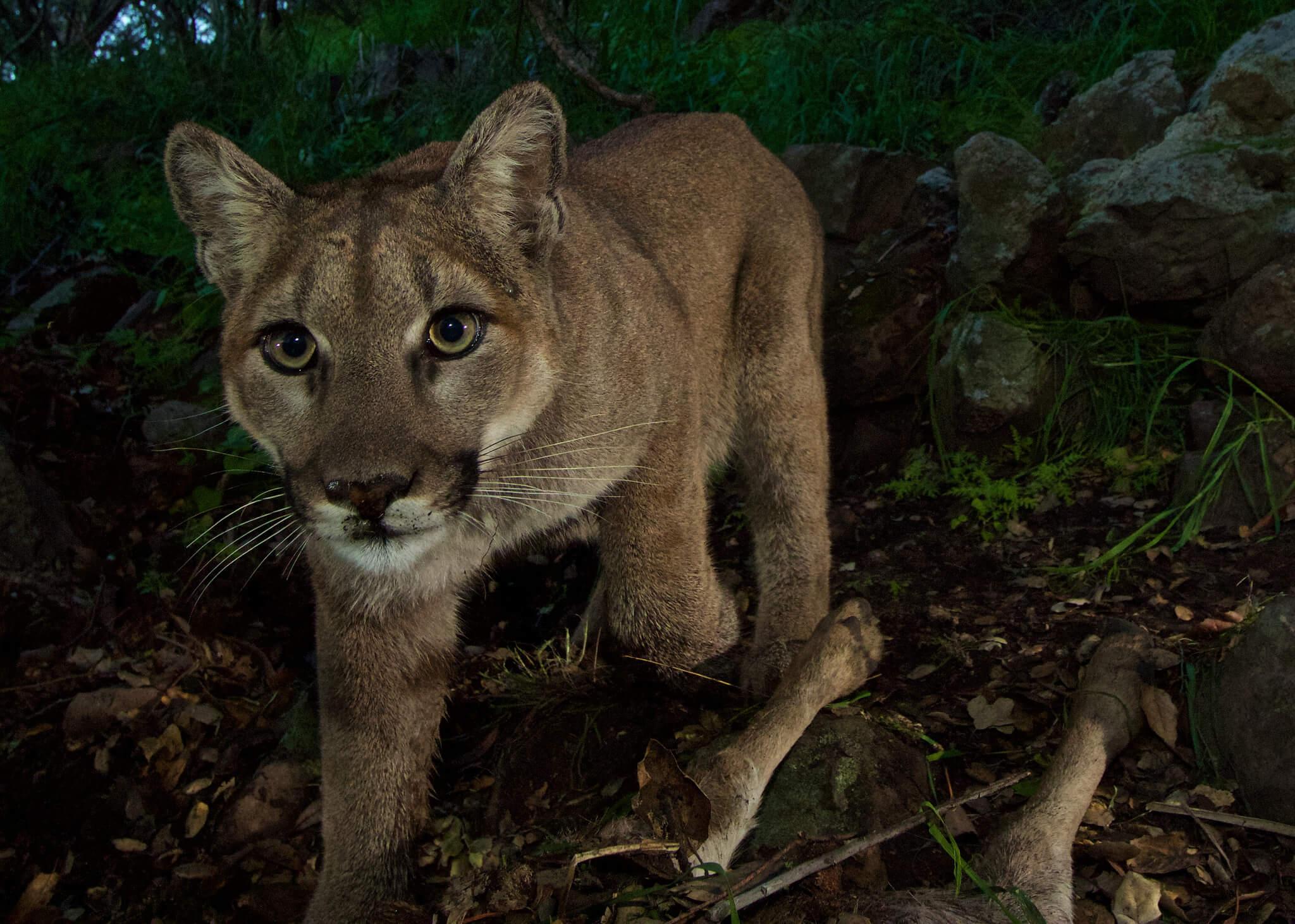 Dating Cougar sivustot