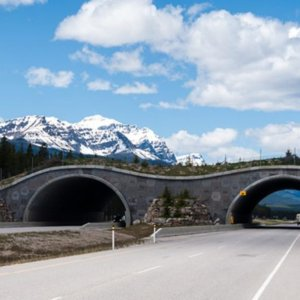 Construction Review | California to construct World's largest highway overpass for wildlife