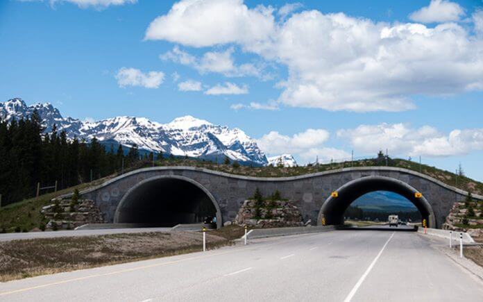 Construction Review   California to construct World's largest highway overpass for wildlife
