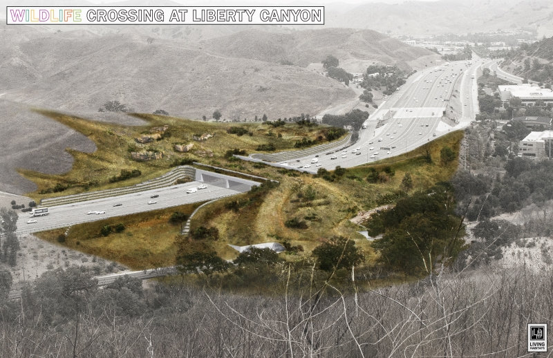 CBS Los Angeles | Campaign To Build Wildlife Crossing Over 101 Freeway Raises $18 Million; Groundbreaking Within Sight